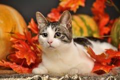 Cat amongst autumn leaves Stock Photo