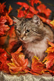 Cat amongst autumn leaves Stock Image