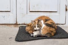 Cat& x27 ; amour de s Images stock