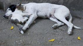 Cat&Dog Imagens de Stock Royalty Free