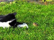 Cat&mouse Lizenzfreie Stockbilder