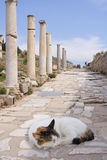 Cat on ancient colonade, Ephesus. A cat sleeping on the colonade of ancient city Ephesus, Turkey - montage Royalty Free Stock Image