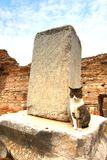 Cat in The ancient town Ephesus, Turkey Stock Images