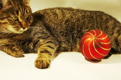 Cat And Christmas Ball Royalty Free Stock Images