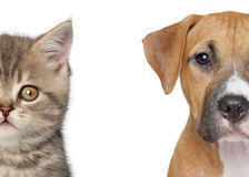 Free Cat And Dog Stock Photography - 25063042