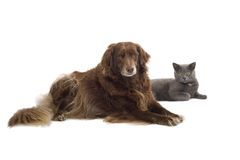 Free Cat And Dog Royalty Free Stock Photography - 2726557