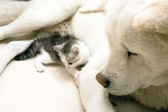 Free Cat And Dog Stock Photos - 6592253
