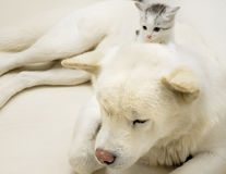 Free Cat And Dog Royalty Free Stock Photography - 6592317
