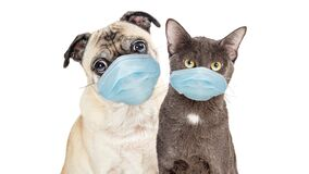Free Cat And Dog Wearing Protective Surgical Face Masks Stock Photo - 179348810