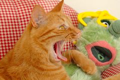 Cat And Doll Royalty Free Stock Photos