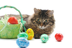 Cat And Easter Eggs Royalty Free Stock Image