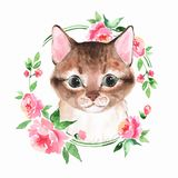 Cat And Flowers. Watercolor Illustration 4 Royalty Free Stock Photography