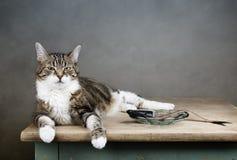 Free Cat And Herring Stock Photos - 30117493