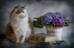 Cat And Hydrangea Royalty Free Stock Images