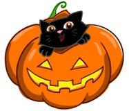 Cat And Jack O Lantern Royalty Free Stock Image