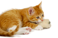 Cat And Mouse Stock Photography
