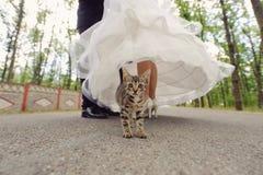 Free Cat And Newlyweds Stock Image - 36236201