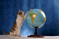 Cat And The World Royalty Free Stock Images