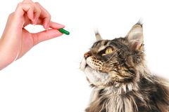 Free Cat And Vet Stock Image - 160840151