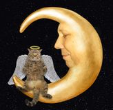 Cat angel on the moon royalty free stock images
