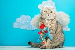 Cat Angel sob a forma do cupido, o dia de Valentim imagem de stock