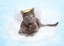 Cat Angel sulla nuvola nel cielo Fotografia Stock Libera da Diritti