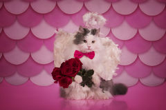 Cat with angel wings and a bouquet Royalty Free Stock Image