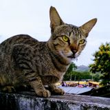 Cat angry mood. Cute cat with angry mood royalty free stock photo