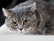 Cat animal Stock Image