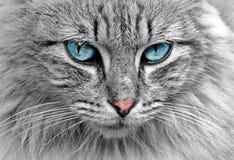 Cat, Animal, Cat Portrait, Mackerel Royalty Free Stock Photography