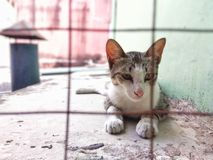 Cat. Animal cat cute Stock Image