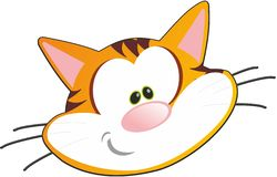 Cat animal cute orange tiger Royalty Free Stock Images