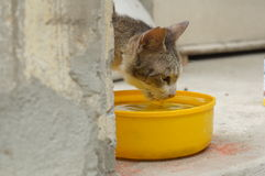Cat animal drinking water mammals sick concept Royalty Free Stock Image