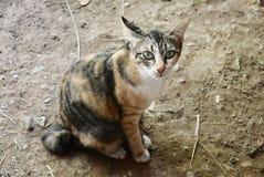 Cat. Animal kitten eyecontact zoo stock photo
