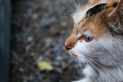 Cat animal kitty fur face pet thinking royalty free stock photo