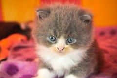 Cat Stock Images
