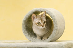 Cat animal pet. A cat in cylinder .animal pet Stock Photo