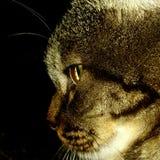 Cat Stock Photo