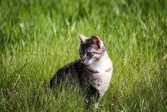 Cat, Animal Portrait, Grass Stock Photo