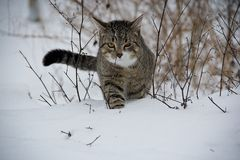 Cat, Animal, Snow Royalty Free Stock Image