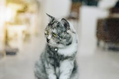 Cat looking out window or door for wait something. Cat is a animal type mammal and pet so cute gray color sitting for relax and looking out a window or door for royalty free stock photo