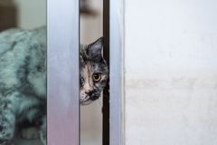 Cat looking out window or door for wait something. Cat is a animal type mammal and pet so cute gray color sitting for relax and looking out a window or door for stock photography