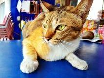 Cat animal. Wallpaper Stock Photo