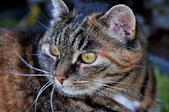 Cat, Animal, White, Pet, Cat'S Eyes Royalty Free Stock Photos