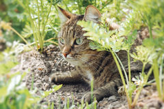 Cat. Animals in nature. Russia Yekaterinburg Royalty Free Stock Photography