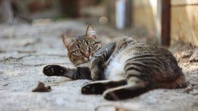 Cat. Animals in nature. Russia Yekaterinburg Stock Image