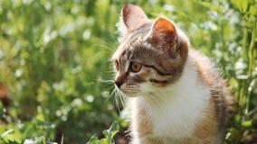 Cat. Animals in nature. Russia Yekaterinburg Stock Photos