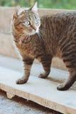 Cat. Animals in nature. Russia Yekaterinburg Royalty Free Stock Photo