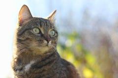Cat. Animals in nature. Russia Yekaterinburg Stock Photo