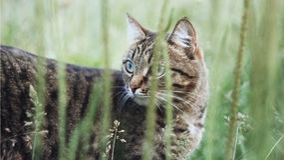 Cat. Animals in nature. Russia Yekaterinburg Stock Images